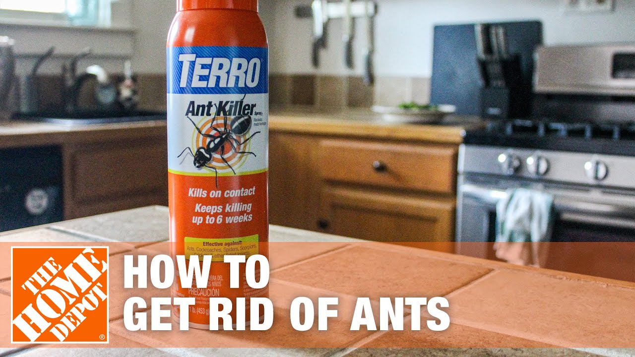How To Get Rid Of Ants The Home Depot Youtube