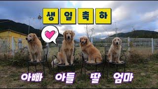 깜빡하고 넘어갈뻔한 골든리트리버 남매의 4번째 생일 /…