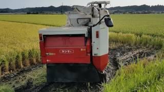 видео Орошение риса