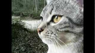 Warrior Cats Hörbuch - Die neuen Clans/1 Part 3 - Teil 1
