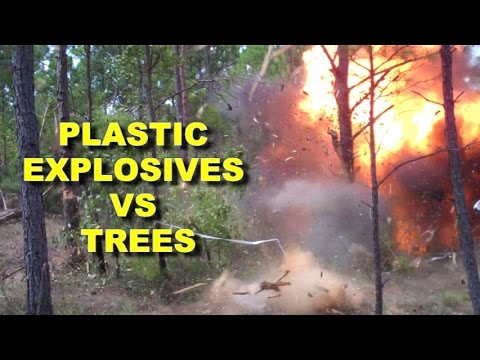 Blowing up Trees with C4! Up close!  Army Combat Engineers