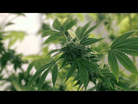 We Are The Cannabis Growers Of Canada
