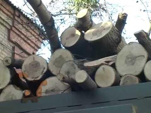 Незаконна вирубка лісу