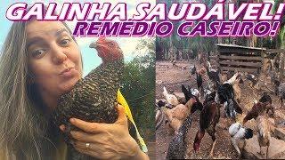 MELHOR REMÉDIO CASEIRO PARA TER GALINHA SAUDÁVEL E FORTE!!! COMBATE TODAS AS DOENÇAS E PRAGAS!