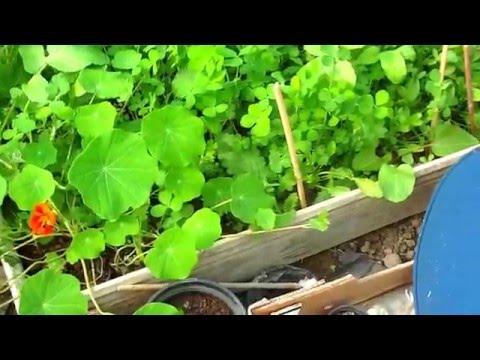 Irish Garden Seed Bomb Growing Results Ireland
