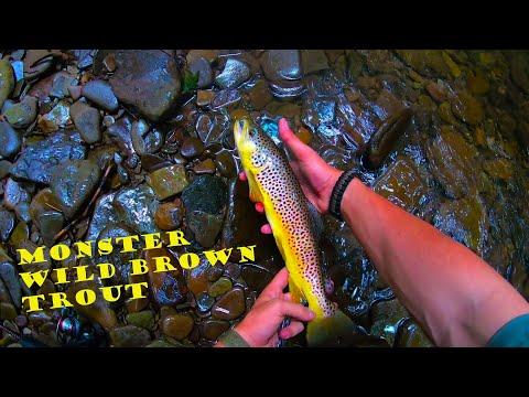 Pine Creek Trout Slam + MONSTER Wild Brownie
