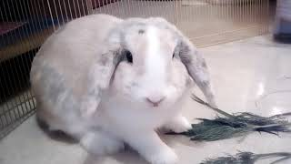 Плюсы и минусы декоративных кроликов )