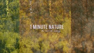 Le Cerf Pirate - 1 MINUTE NATURE - EP 08
