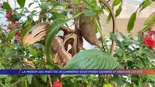 La maison des insectes de Carrières-sous-Poissy ouverte et gratuite cet été