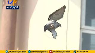 TS Police Rescues Bird | From Chinese Manja | Hyderabad