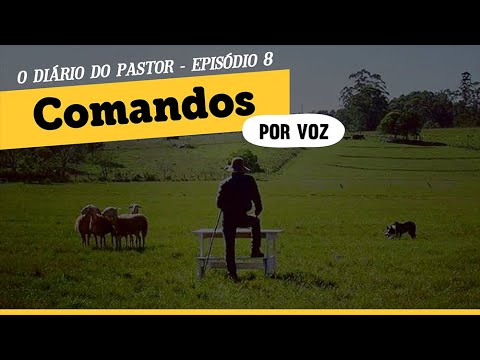 Comando de Border Collie por voz | Episdio 08 | Dirio do Pastor