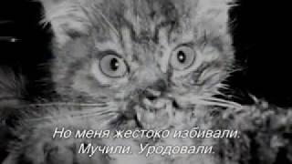 Издевательство над котенком!