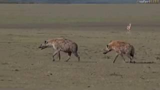 Pt 1 Safari Live's Sunset Safari Drive at 2:40 PM on Nov 22, 2017 thumbnail