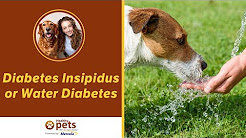 Dr. Becker Discusses Diabetes Insipidus or Water Diabetes