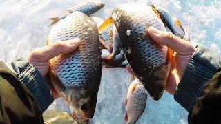 ПЛОТВА НЕ ЛЕЗЕТ В ЛУНКУ Вот это ЛОШАДИ Рыбалка на безмотылку ЧЕРТИК по последнему льду