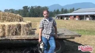 Our Free Range Turkey Farm