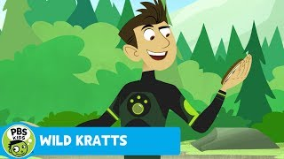 Wild Kratts: Grizzly Power thumbnail