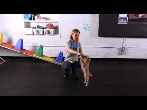 How to Teach Your Dog to Dance | Dog Tricks