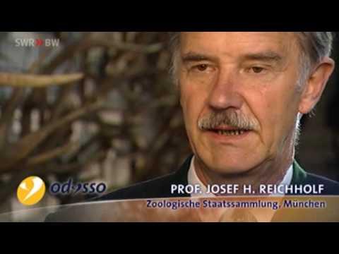 Die Wahrheit über die Jagd - Evolutionsbiologe Prof. Josef Helmut Reichholf  widerlegt Jägerlügen