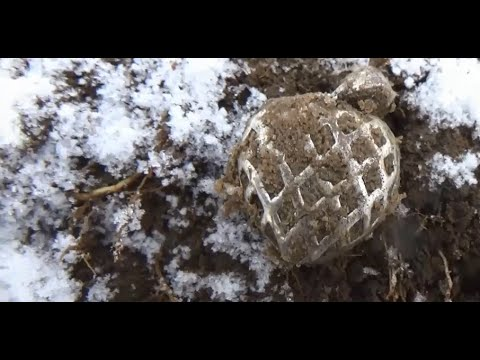 Поиск ЗОЛОТА Зимний коп МОНЕТ КАНАДА