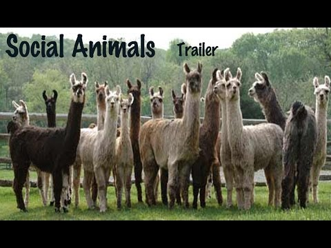 social animal W g runciman's masterly book sets out the present extent of our knowledge  about how human groups, communities, institutions, and societies work and the.