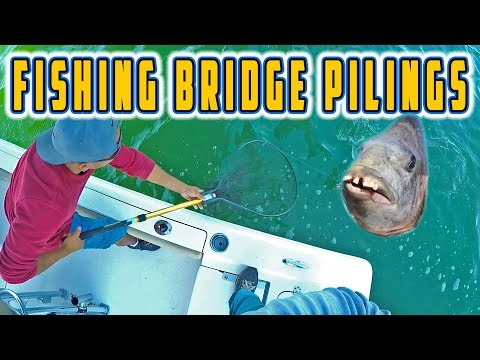 This FISH Has HUMAN TEETH 😁 (Fishing Bridge Pilings For Big Fish)