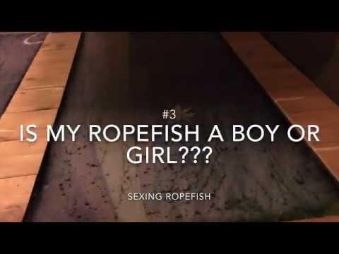 Ropefish FAQ ... And Bonus LR...B Roll :)