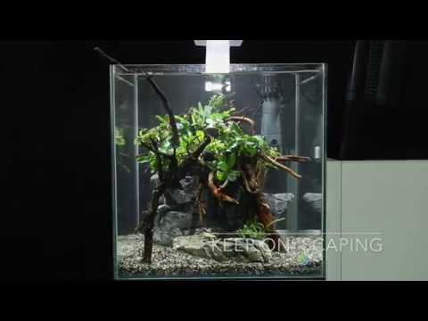 Nano Aquascape Simple - Aquascape Ideas