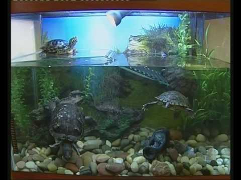 Друзья наши меньшие - черепахи