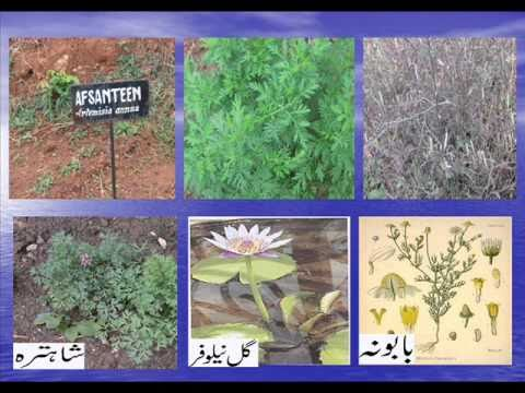 Indian Medicine Unani Lecture Video Youtube