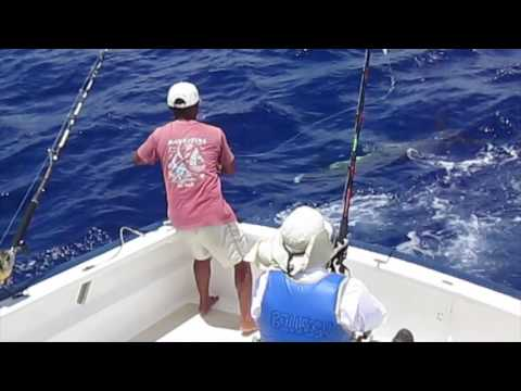 Billfish-Le Morne-Mauritius