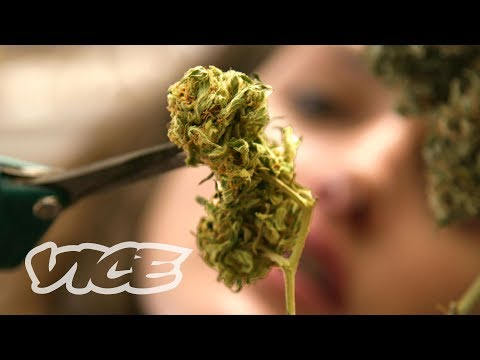 Inside the College for Budding Weed Entrepreneurs