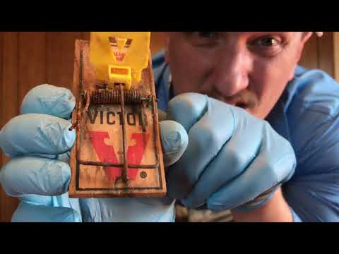 Mice Monday - Ep.1 - Why Mouse Traps DON'T WORK!