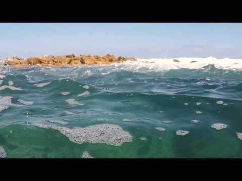 Snorkeling Clovelly Sydney NSW