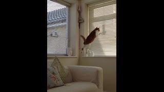 Cat Attacks Bird Feeder Fail