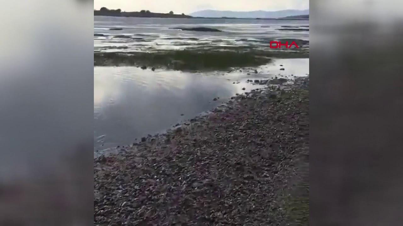 Ege Denizi'nde 6.6 büyüklüğünde depremin ardından deniz suyu çekildi: Seferihisar'da tsunami: Sokakları deniz suyu bastı. Bir kadın enkazın altından sağ çıkarıldı