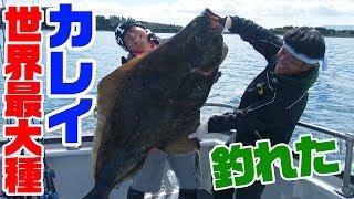 世界最大種のバケモノが釣れた‼【アラスカ編#4(ラスト)】