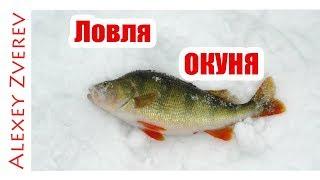 Окунь на мормышку . Зимняя рыбалка.Окунь со льда. Лвля на мотыля