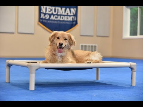 Zoey (Retriever mix) Boot Camp Dog Training Video Demonstration