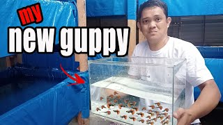 Wild caught | CATCHING WILD GUPPY using tiny fish net in our