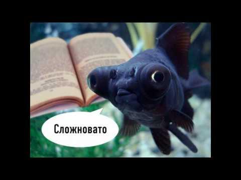 Меня напрягают картинки рыб с книгами