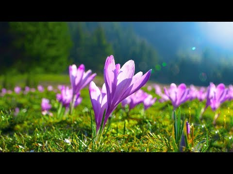 Beautiful Piano Music - Relaxing Music, Study Music, Stress Relief, Sleep Music (Sara)