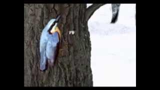 География 22. Птицы смешанного леса — Шишкина школа