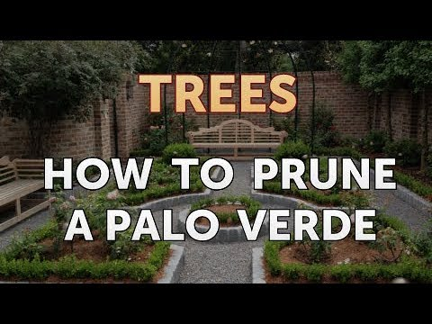 How To Prune A Palo Verde You
