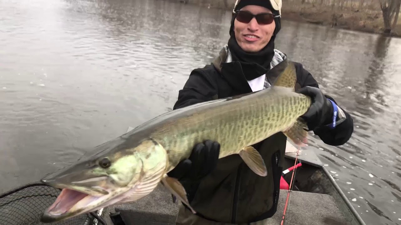 st patrick s day musky hunt 4 fish landed youtube rh youtube com Musky Clip Art Tiger Muskie