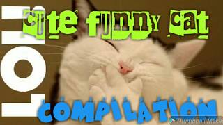 Cute funny cat compilation