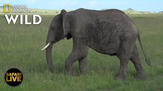 Safari Live - Day 320 | Nat Geo WILD