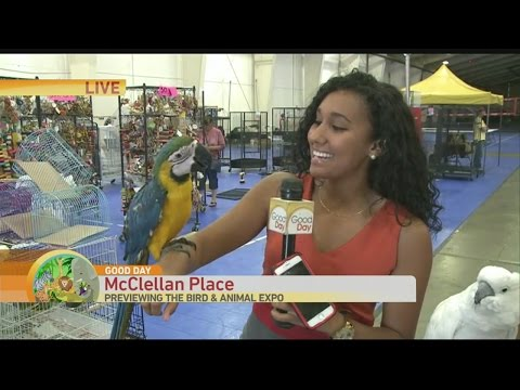 Sacramento Bird & Animal Expo