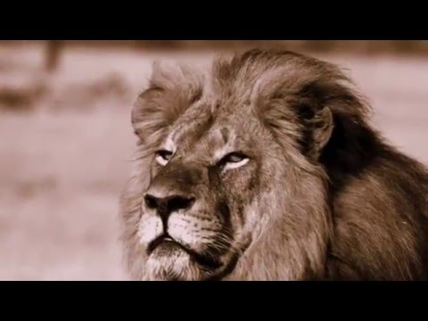 Cecil and Jericho - a story of unlikely friendship