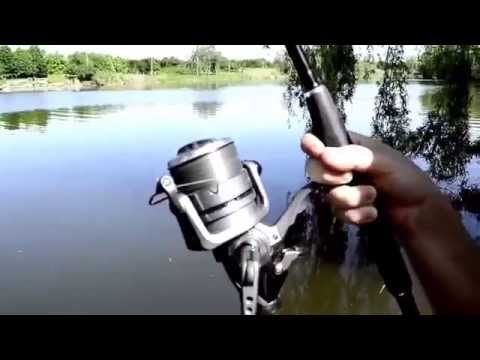 на что ловить черного амура в рыбалке